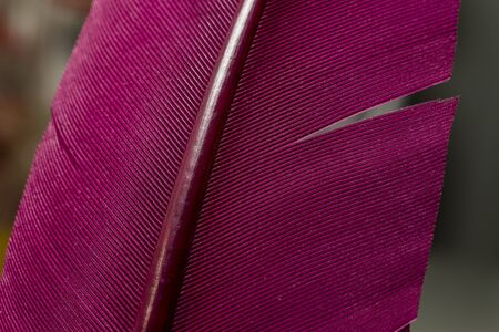 Close up Bird feather with red light. Beautiful background texture. Macro photography view. The texture of a red pen. Foto de archivo