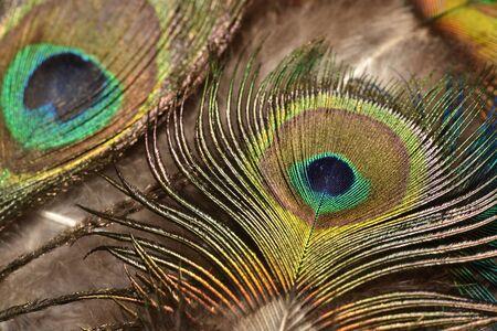Peacock feathers closeup Bright colors. Banco de Imagens