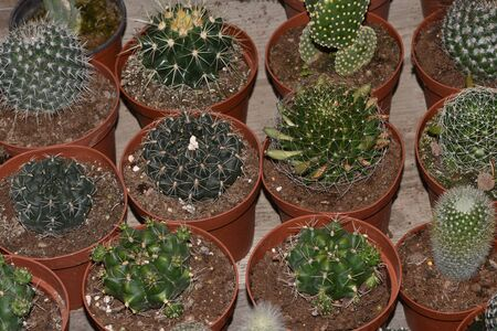 Different types of cacti and succulents
