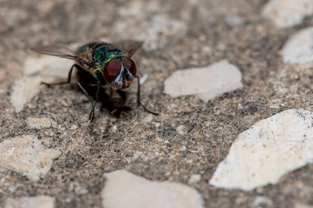 Green fly on a stone Banque d'images