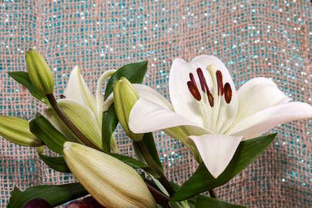 white lily flower garden. White Asiatic lily flower in the garden. Beautiful nature lily flower blossom closeup petal plant. Green floral bouquet.