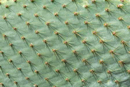 Background of green cactus close up, cactus texture macro photography Banque d'images