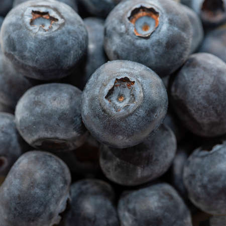 fresh blueberries background, blueberry background closeup Banque d'images