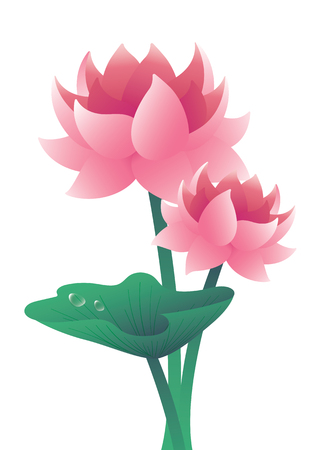 lotus Water Lily illustration vector background