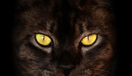 cat eye: eyes of black cat in dark