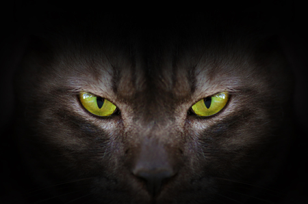 Eyes of black cat in dark, Hypnotic Cat Eyes Stock Photo