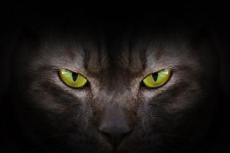 Eyes of black cat in dark, Hypnotic Cat Eyes Banque d'images
