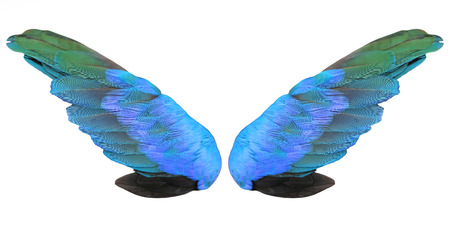 Colorful feathers wings isolated on white background Stock Photo