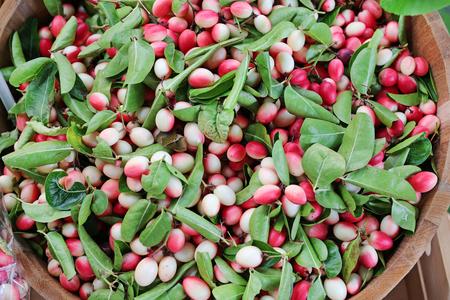 the yawn: Mango lime yawn yell, Apocynaceae