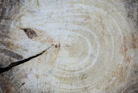 face in tree bark: The texture of old wood block Stock Photo