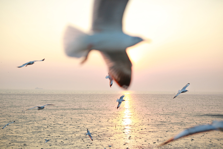 image of Seagulls flying in the sky at sunset.