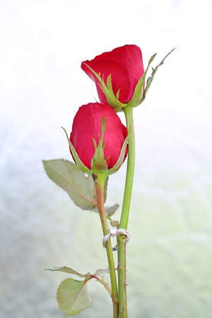 Two Red roses flower with two wedding rings on foil background.