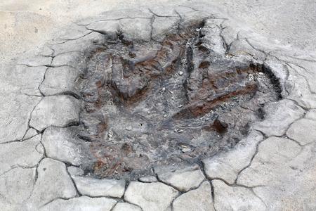 Dinosaur Footprints model on the cement floor