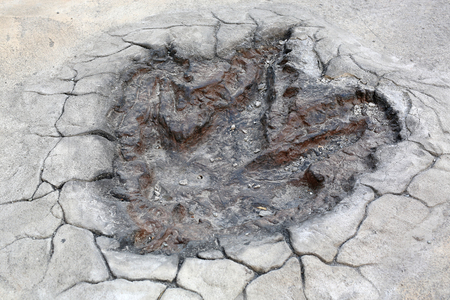 Dinosaur Footprints model on the cement floor
