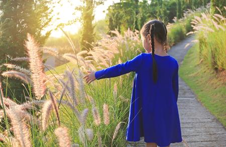 Achteraanzicht Aziatisch klein meisje dat de hand gebruikt om wild gras aan te raken bij zonsondergang. Stockfoto