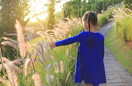 Back view Asian little kid girl using hand to touching wild grass at sunset. Banque d'images
