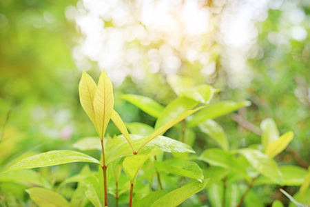 Young tree leaf on blurred background in the summer garden. Stock Photo