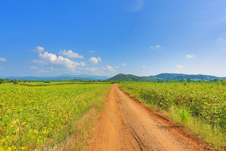 Beautiful blue sky and country road to the mountain. Rural green field and trees. Imagens