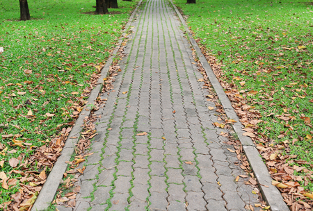 The walk path in the park with dried fall leaves and green grass background.