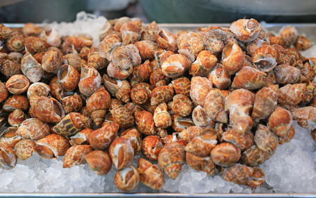 Fresh Spiral babylon snail on ice at local market in Thailand.