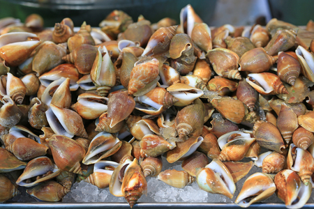 Fresh snail on ice at local market in Thailand.