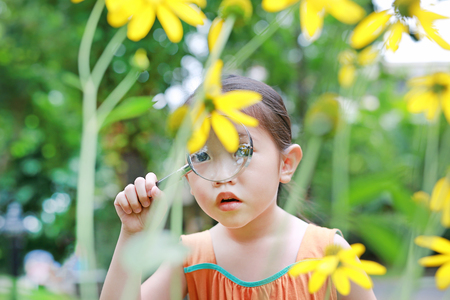 Adorable little Asian child girl explorer beautiful blossom yellow flowers in summer garden. Close-up nature as researcher.
