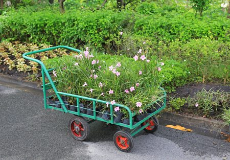 Plant a flower in the green park garden. Small flowers in cart. Stock Photo
