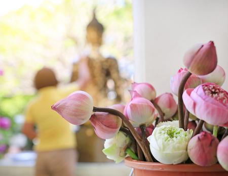 Lotus para ceremonia religiosa budista
