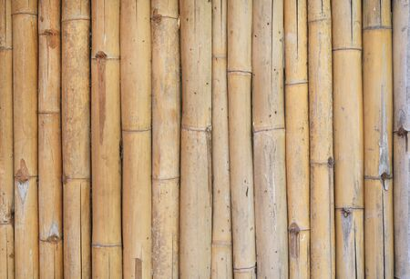 Vertical bamboo fence background. Stock Photo
