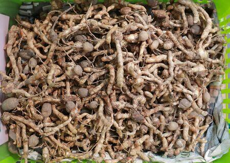 Curcuma spp. (ZINGIBERACEAE). Thai herbs for medicine. Stock Photo - 124681066