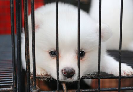 Puppies inside a cage on display for sale Stok Fotoğraf