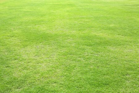 Fond de champ d'herbe taillée verte naturelle pour le sport. Banque d'images