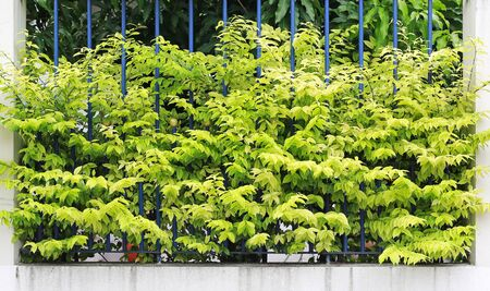 Small decorative tree top leaf on grille fence wall.
