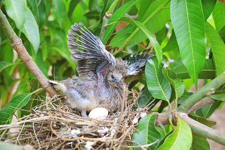 Winged newborn bird and the one egg in birds nest on tree branch. Stock Photo