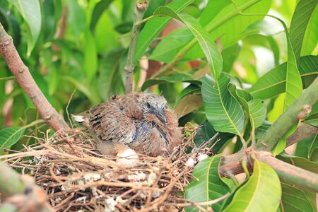 Newborn bird hatched from the egg and the one egg in bird's nest on tree branch in the nature.