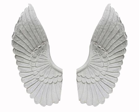 Angel wing isolated on white background
