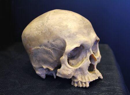 Verwitterter menschlicher Schädel Standard-Bild