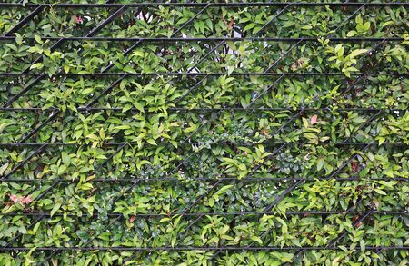 Metal grille fence and green leaf background.