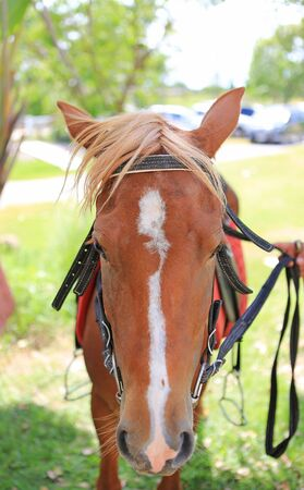 Portrait close up of a young horses face.