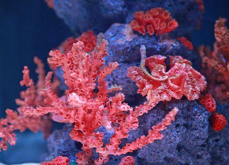 Corals in aquarium tank Stock fotó