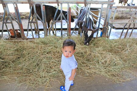Adorable little Asian baby boy looking camera in cows farm while feeding cow on holiday with family.