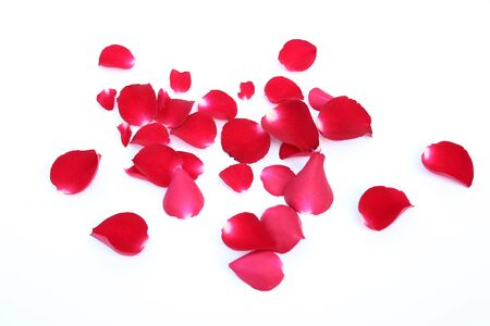 Abstract of red rose petals isolated on a white background.
