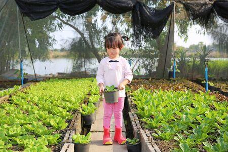 Little farmer girl holding young lettuce pot in lettuce plants 版權商用圖片