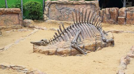 Replica dinosaur fossil on the sand ground