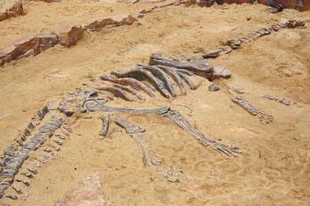 Replica dinosaur fossil on the sand ground