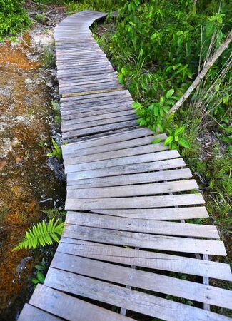Wooden bridge through the mangrove reforestation