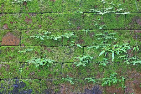 Green moss on old stone brick wall background.