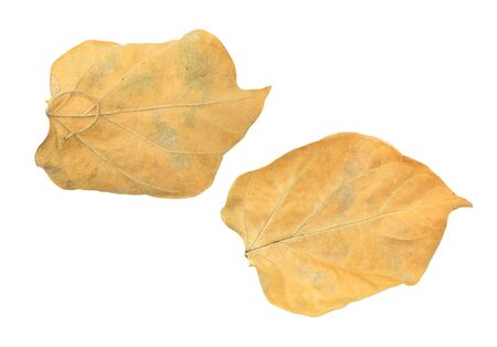 Brown dry leaves isolated over white background. Фото со стока