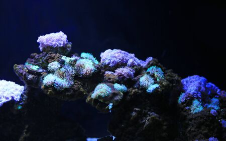 Corals reefs in aquarium tank. Stock fotó