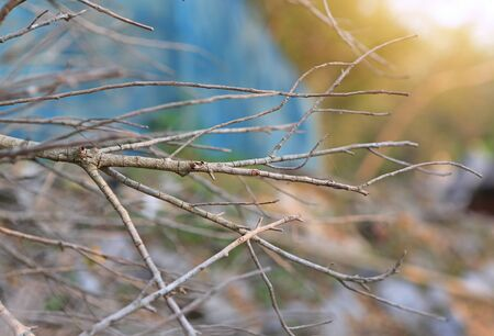 Dry twigs branch in the nature with sun rays through